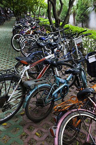 Bicycles at Golden Cup